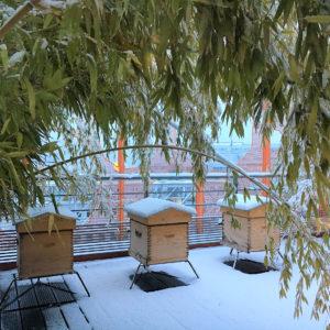 Les ruches du Cube Orange - Groupe Cardinal, Lyon Confluence